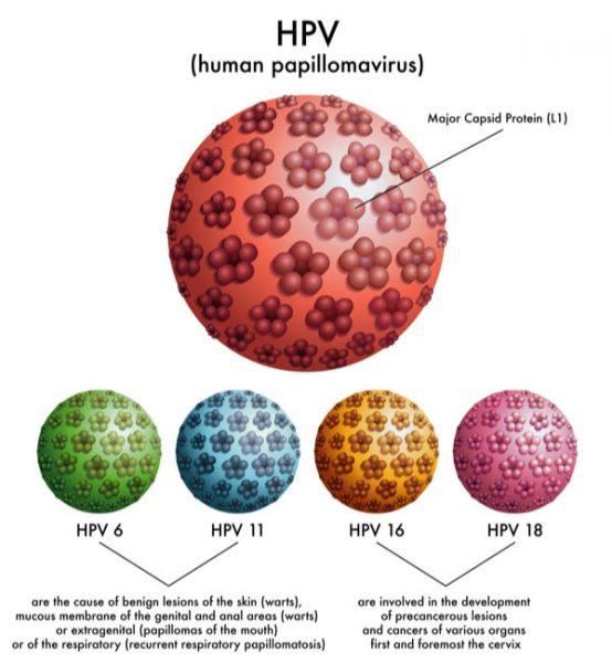 HPV là gì?
