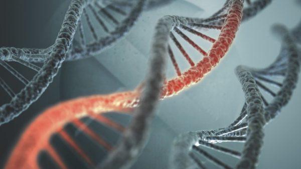 Hội chứng FAP (đa polyp tuyến có tính gia đình) do đột biến gen APC có thể làm xuất hiện nhiều polyp ở đại tràng