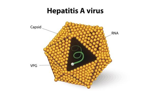 Viêm gan A có nguy hiểm không
