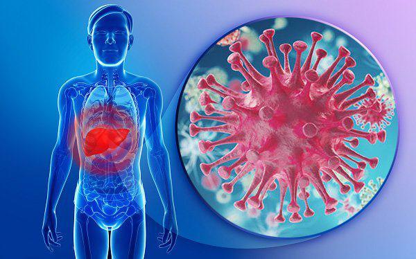 Nhiễm virus viêm gan B hoặc C mạn tính làm gia tăng nguy cơ mắc ung thư gan
